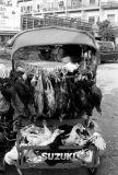Laos Transport 01